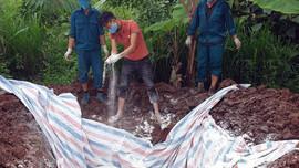 Điện Biên: Tiêu hủy 560kg lợn nhiễm dịch tả châu Phi tại huyện Mường Nhé