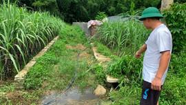 Bá Thước (Thanh Hóa): Cần xử lý dứt điểm trang trại lợn gây ô nhiễm môi trường