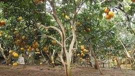 Thẩm quyền cho thuê đất trồng cây lâu năm