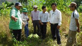 Quảng Ngãi: Hướng quản lý rừng bền vững