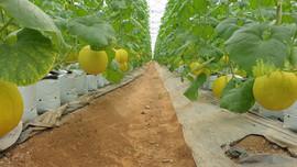 Tăng cường ứng dụng tưới tiên tiến cho ngành nông nghiệp
