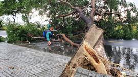 Đà Nẵng: Đường ngập, cây gãy đổ đè nhà người dân do ảnh hưởng bão số 5