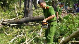 """Huế: Toàn lực khắc phục cây xanh """"chảy máu"""" sau bão số 5"""