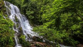 Quảng Bình: Xây dựng Phương án quản lý rừng bền vững Vườn Quốc gia Phong Nha – Kẻ Bàng