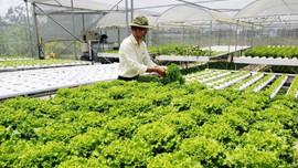 Nông dân Đà Nẵng làm nông sản sạch