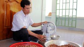 """Nông dân Gia Lai kém vui vì cây """"tỷ đô"""" giảm giá sâu"""