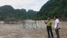 Quảng Ninh: Nâng cao hiệu quả việc bảo tồn thiên nhiên và đa dạng sinh học biển đảo