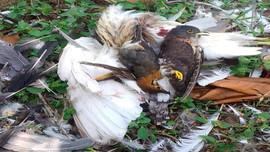 Thanh Hóa: Chấm dứt tình trạng săn bắt chim trời