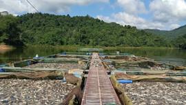 Điện Biên: Hàng chục tấn cá lồng tại hồ Hồng Khếnh bị chết