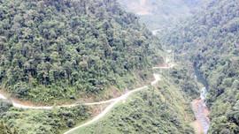 Lào Cai : Giải ngân trên 100 tỷ đồng dịch vụ môi trường rừng cho các chủ rừng