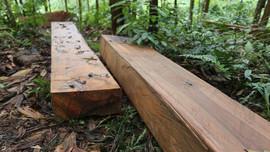 Điều tra đối tượng khai thác trái phép ở rừng phòng hộ xã Phước Thành (Quảng Nam)