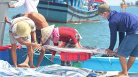 """Quảng Nam: Gian nan """"cuộc chiến"""" bảo vệ môi trường sinh thái biển"""