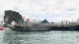 Quảng Ninh khai thác gắn với phát triển bền vững ngành thủy sản