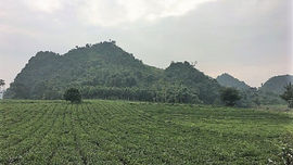 Sơn La: Kiểm tra, rà soát các vi phạm về đất đai với mô hình du lịch kết hợp trang trại nghỉ dưỡng