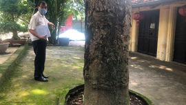 Hà Nội: Cần xem xét nguyện vọng người dân trong việc cấp sổ đỏ Đền Quan Cử
