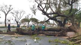Đà Nẵng tan hoang sau bão số 9
