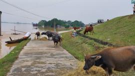 Nghệ An: Thiệt hại do mưa lũ tiếp tục tăng