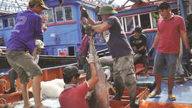 Trà Vinh tuyên truyền các quy định trong khai thác thủy hải sản