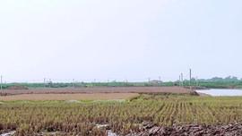 Đông Hưng, Thái Bình: Cần làm rõ vi phạm trong việc bán đất ruộng trái phép tại xã Minh Tân