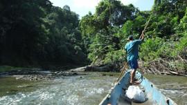 Tài trợ đề xuất báo chí viết về rừng Đông Nam Á