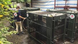 Các chủ gấu chuyển giao 15 cá thể gấu về các trung tâm cứu hộ