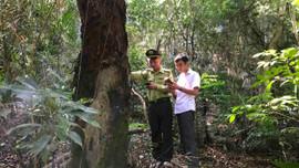 Quảng Ninh: Không ngừng nâng cao tỷ lệ che phủ của rừng
