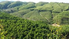 Khoảng trống chính sách quản lý rừng phòng hộ