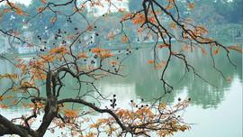 Dự báo thời tiết ngày 21/11: Bắc Bộ sáng sớm cho sương mù, trưa chiều trời nắng