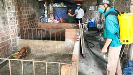 Khánh Hòa: Tăng cường phòng chống dịch bệnh trên gia súc, gia cầm