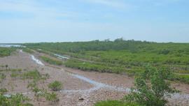 Khu bảo tồn đất ngập nước Thái Thụy - Thái Bình: Khơi nguồn giá trị