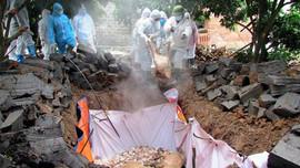 Ninh Bình: Tăng cường công tác kiểm soát dịch tả lợn châu Phi