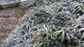 Nghệ An: Ra Công điện ứng phó với rét đậm, rét hại