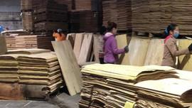 Nhà máy chế biến gỗ Bắc Sơn tạo việc làm cho nhiều lao động địa phương