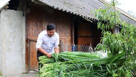 Sa Pa- Lào Cai: Chủ động chống rét cho người và vật nuôi