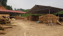Võ Nhai (Thái Nguyên): Tai nạn lao động tại Xưởng bóc gỗ Trang Thuật