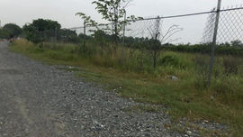 Hủy bỏ 61 dự án thu hồi đất, chuyển mục đích sử dụng đất trồng lúa