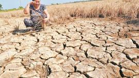 Phát triển nông nghiệp bền vững ứng phó với biến đổi khí hậu ĐBSCL