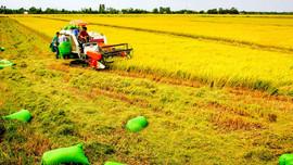 Xây dựng nền nông nghiệp bền vững và có trách nhiệm