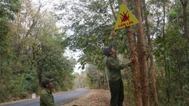Đắk Nông: Chủ động công tác phòng chống cháy rừng mùa khô