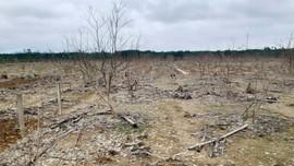 Thừa Thiên Huế: Thiếu nguồn giống sản xuất sau mưa lũ