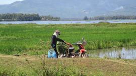 Quản lý, bảo tồn và sử dụng bền vững các vùng đất ngập nước