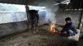 Lai Châu: Tăng cường triển khai các biện pháp phòng, chống rét đậm, rét hại
