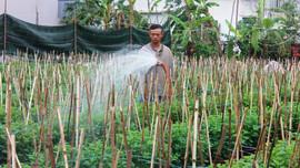"""Đà Nẵng: Sau bão lũ, người trồng hoa """"tất bật"""""""