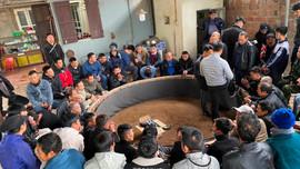 Quảng Ninh: Bắt quả tang 59 đối tượng đá gà ăn tiền