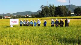 Đề xuất chuyển đổi nông nghiệp vùng đồi núi Bắc Trung Bộ