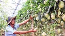 Hỗ trợ sản xuất nông nghiệp thích ứng với biến đổi khí hậu