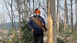 Công ty Cổ phần Trúc Thôn: Xả thải hàng loạt cây rừng chết khô
