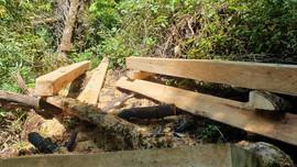 Yên Bái: Kỷ luật nhiều cán bộ liên quan đến vụ phá rừng