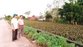 Ứng Hoà – Hà Nội: Dồn điển đổi thửa làm thiếu hụt 720m2 ruộng đất của người dân?