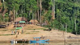 Quảng Nam sẽ đánh sập các hầm vàng trong vườn quốc gia Sông Thanh